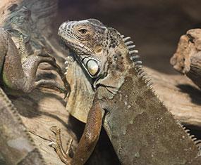 爬虫類コーナー